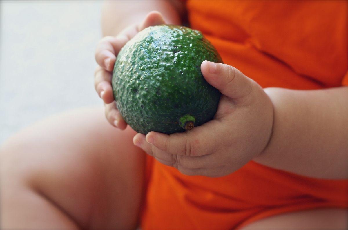 Avocado for babies.